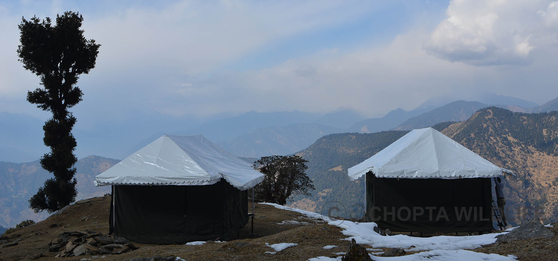 chopta willdlife resorts